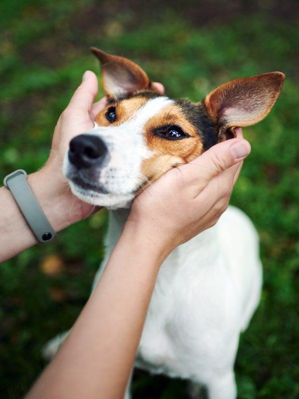 crop-hands-petting-dog-SRW7FMP.jpg